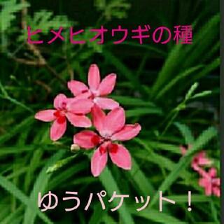 ヒメヒオウギの種(サーモンピンク)100粒+α(その他)