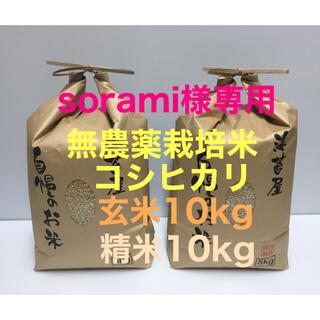 sorami様専用 無農薬コシヒカリ玄米10kg、精米10kg、焼き海苔 40枚(米/穀物)