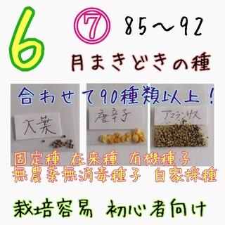 6月まきどきの種⑦ 85~91 家庭菜園 野菜の種 ハーブの種 固定種 種 種子(野菜)