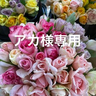 バラ(切り花・生花) おまかせミックス 20センチ 60本 産地直送 鮮度抜群!