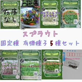 スプラウト 固定種 5種 セット 家庭菜園 野菜の種 ハーブの種 水耕栽培 種子(野菜)