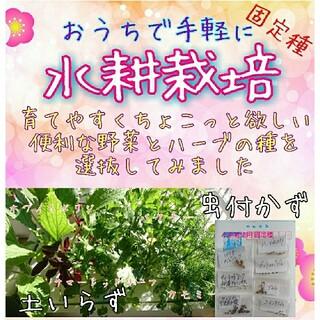 水耕栽培用種子 固定種 オススメセット 野菜の種 ハーブの種 ベランダ栽培 種子(野菜)