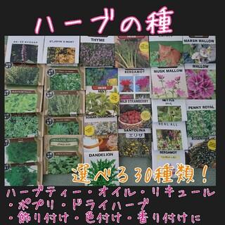ハーブ 種 種子 野菜の種 家庭菜園 園芸 プランター ポプリ サシェ リース(野菜)