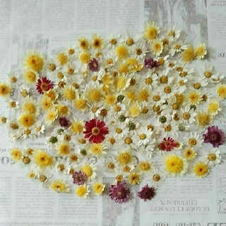 ドライフラワー 花材23