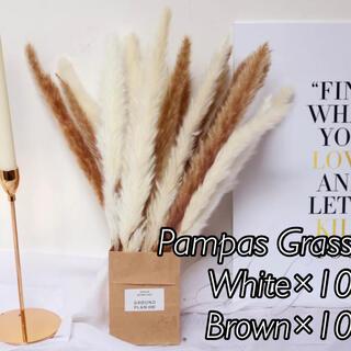 パンパスグラス ホワイト10本、ブラウン10本(ドライフラワー)