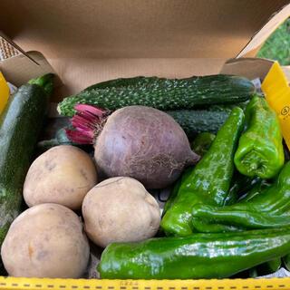 新鮮野菜詰め合わせ!京都の畑より直送!