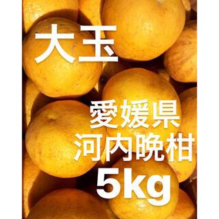 カズ様 専用 愛媛県 宇和ゴールド 河内晩柑 5kg(フルーツ)