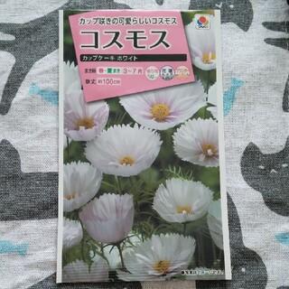 コスモス カップケーキ ホワイト 種(その他)
