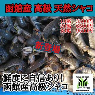 北海道 函館産 高級 天然 シャコ 20尾(魚介)