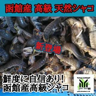 函館産 天然シャコ10尾(魚介)