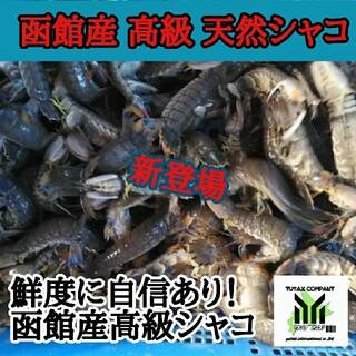 函館産 天然シャコ20尾(魚介)