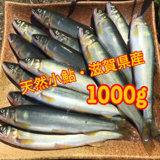 天然小鮎【1,000g】(10〜12㎝程度)滋賀県産(魚介)