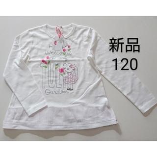 KP - KP ニットプランナー 子供服 女の子 Tシャツカットソー 半袖 120 新品