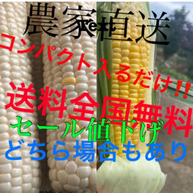 農家直送とうもろこしゴールドホワイトコンパクト入るだけ 食品/飲料/酒の食品(野菜)の商品写真