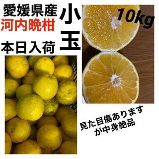 愛媛県産 河内晩柑小玉10kg(フルーツ)