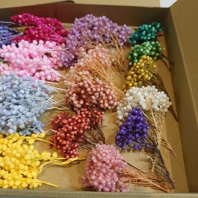 〔確認用〕花材  インディアンコーン&ライスフラワー ハンドメイドのフラワー/ガーデン(ドライフラワー)の商品写真