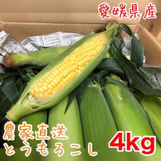 朝どり とうもろこし 4kg 農家直送 ゴールドラッシュ スイートコーン(野菜)