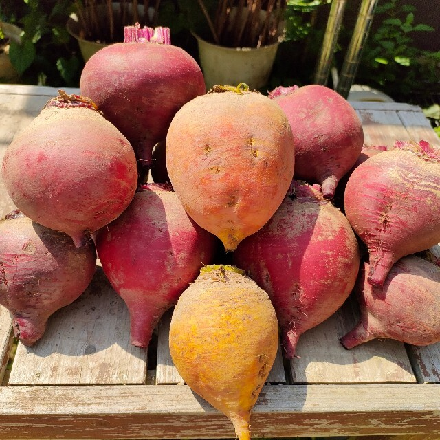 ビーツ2.5kg・イエロービーツ入(農薬化学肥料不使用) 食品/飲料/酒の食品(野菜)の商品写真