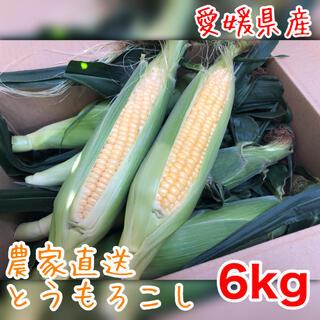 朝どり とうもろこし 6kg 農家直送 ゴールドラッシュ スイートコーン(野菜)
