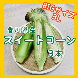 【大きいサイズのみ】スイートコーン3本 白いとうもろこし ホワイト(野菜)