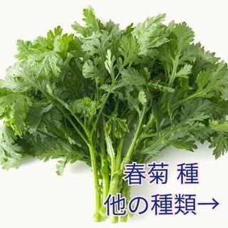 野菜種☆春菊☆変更→つるなしいんげん エゴマ わさび菜 小蕪 芽キャベツ(野菜)