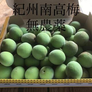 紀州無農薬南高梅 1.2キロ(フルーツ)