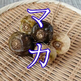 【お試し版!】生マカ 50g【滋養強壮!】(野菜)