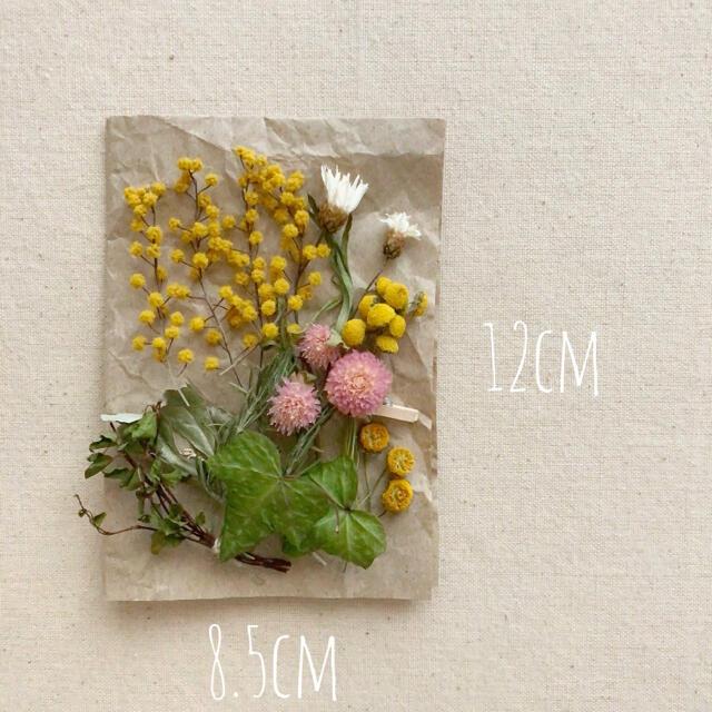 dry botanical /  ドライフラワー 花材  ミモザ  ハンドメイド ハンドメイドのフラワー/ガーデン(ドライフラワー)の商品写真