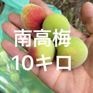 南高梅 無農薬 10キロ(フルーツ)