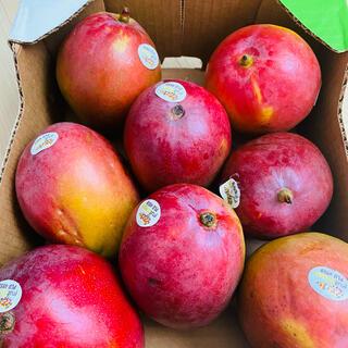 コストコ(コストコ)のアップルマンゴー 大玉 メキシコ産 4kg(フルーツ)