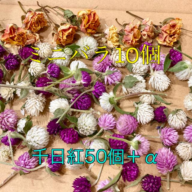 千日紅ミックス【若干茎あり】50個+α・ミニバラのドライ10個 ハンドメイドのフラワー/ガーデン(ドライフラワー)の商品写真