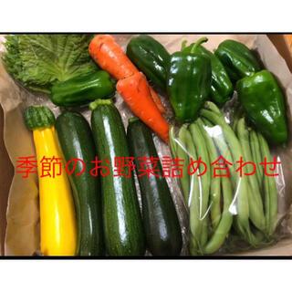 専用です。季節のお野菜詰め合わせ 無農薬 コンパクトボックス(野菜)