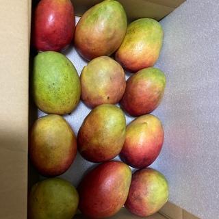 メキシコ産 アップルマンゴー 9~12個入り 約4kg(フルーツ)