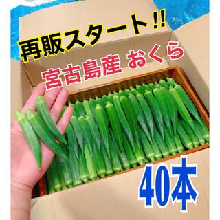 宮古島産 おくら オクラ(野菜)