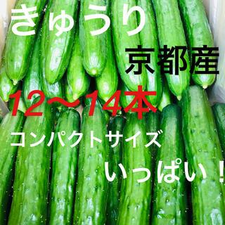 胡瓜 きゅうり 12〜14本 京都産 夏すずみ 良品 農家直送(野菜)