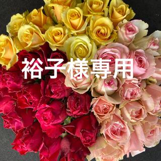 バラ(切り花、生花)おまかせミックス 40㎝ 40本 産地直送!鮮度抜群!薔薇(その他)