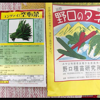 安心 安全 野口のタネ 空芯菜 エンツァイ 40粒 無農薬 オーガニック(野菜)