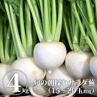 カブ4kg【江戸時代から続く伝統農業】松本農園から直送☆ サラダ蕪 かぶ 白(野菜)