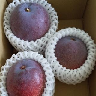 宮崎県産マンゴー(フルーツ)