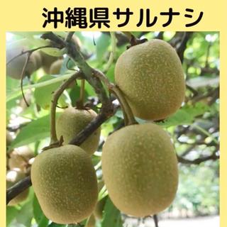 沖縄県産 コクワの実 サルナシ3kg(フルーツ)