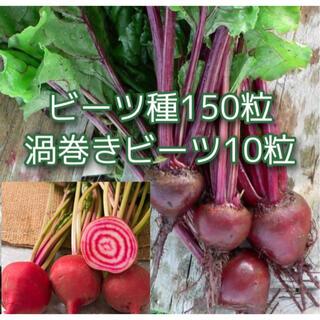 渦巻きビーツ種10粒とビーツ種150粒(その他)