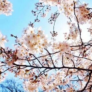 セリーヌ(celine)のCELINE☆ スモール バーティカル カバ / トリオンフキャンバス(トートバッグ)