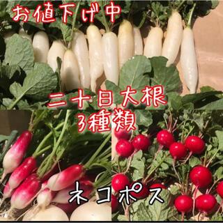 二十日大根 3種類 詰め合わせ ネコポス(野菜)