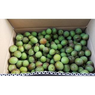 茨城県産 無農薬 梅の実 60サイズに入るだけ  約3㎏~3.5㎏入り