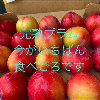 限定3箱❤︎ 自然農法 完熟プラム ヤマトコンパクト配送(フルーツ)
