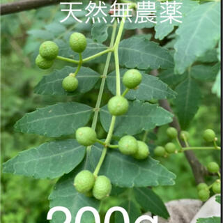 山椒の実 無農薬 200g(野菜)
