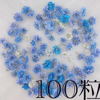 (01)かすみ草ドライフラワー100粒(ドライフラワー)