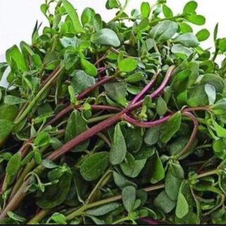 スベリヒュ500g(野菜)