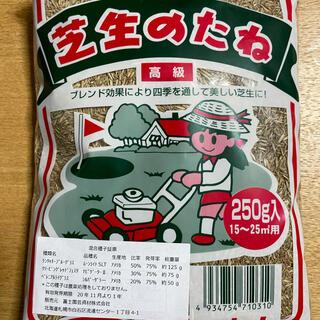 3種混合 芝生の種 250g入り(その他)