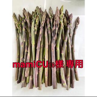 北海道産 朝採れたて紫アスパラ訳あり 500g(野菜)